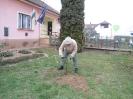Karácsonyfa állítás és díszités 2011_11